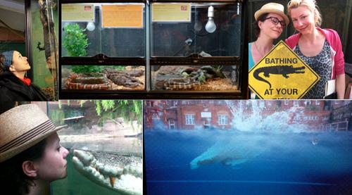 Crocodile-Montage700.jpg